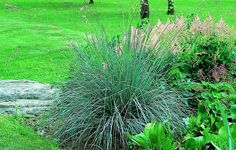 Bilde av BLÅSVINGEL 'INTENSE BLUE' Plants, Garden, Planters, Herbs