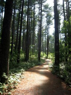 12 Trails In Massachusetts You Must Take If You Love The Outdoors | Only In Your State