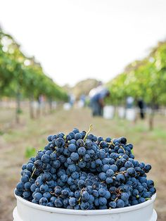 Grape Escapes - Austin Monthly - Learn about these 34 wineries in Austin and the Hill Country. Hill Country Homes, Texas Hill Country, Texas Wineries, Guadalupe River, South Texas, October 2014, Austin Tx, Places To Eat, Travel Around The World