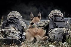 soldiers and their four legged companions - defenders of our land! - soldiers and their four legged companions - defenders of our land! -soldiers and their four legged companions - defenders of our land! Military Working Dogs, Military Dogs, Police Dogs, Military Police, Military Service, War Dogs, Belgian Malinois, Weimaraner, Service Dogs