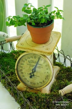 For a green theme, put fresh moss in a wire tray with an antique scale and potted oregano plant.