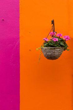 Bella secret garden: pink and orange Rose Orange, Orange And Purple, Orange Flowers, Orange Color, Magenta, Fushia Pink, Orange Art, Murs Oranges, Orange Aesthetic