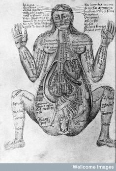 """15th century illustrations of the human body from """"Claudius Pseudo-Galen"""""""