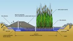 Single artificial wetland successfully treats different types of wastewater