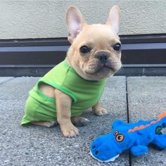 by manny_the_frenchie
