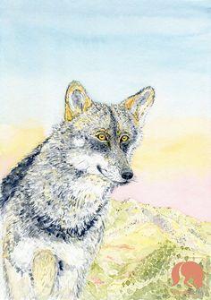 Iberian Wolf at Sunrise Wolf Animal and Nature Art Print