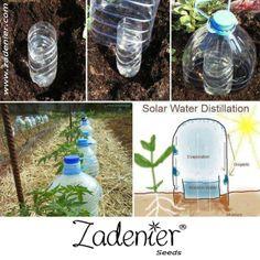 Solar water distillation. www.zadenier.com