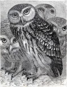Printable - Vintage owl engraving from antique children's book (@Matty Chuah Graphics Fairy)