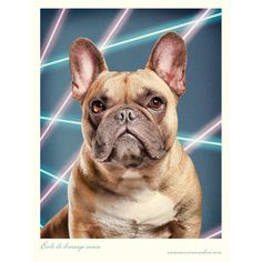 I SO need to to have Miles' photo taken with a laser beam background. Just like my 5th grade school photo. awesome.