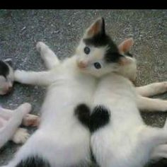 So cute and just in time for Valentine's Day. :-)
