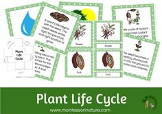 Plant Life Cycle Printables