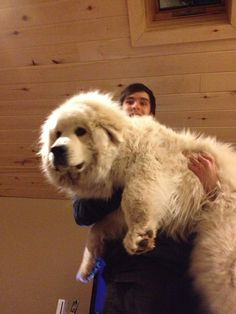 Giant pyr pup