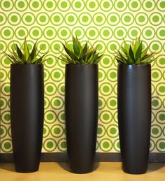 LOVE this wall paper!! The plants and planters match perfectly!!