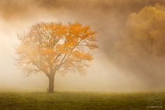 Magická krajina - portfólio Magick, Trees, World, Painting, Art, Art Background, Tree Structure, Painting Art, Kunst