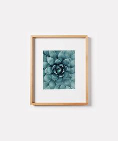 Succulent PrintPlant Wall ArtBotanical PrintAbstract Nature