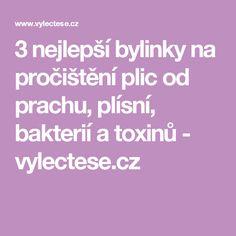 3 nejlepší bylinky na pročištění plic od prachu, plísní, bakterií a toxinů - vylectese.cz