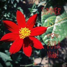 #summer in #costarica is #puravida #sunnyday #flowers #redflower #purenature #lovethesun #costaricaphotoretreat Insightful Quotes, Message Quotes, Positive Messages, Red Flowers, Costa Rica, Sunny Days, Backdrops, Positivity, Pura Vida