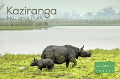 Located in the state of Assam, Kaziranga National Park is world-famous for housing the endangered one-horned rhinoceros. It is a UNESCO World Heritage Site spread in approximately 430 sq km and features numerous species of mammals, reptiles and migratory birds.