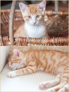 Herzenswärme: AUTUMN CATS