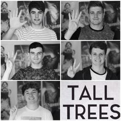 Tall Trees collage
