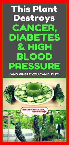 This plant destroys Cancer, Diabetes And High Blood Pressure! Of the various market plants, GOYA is something special. It can help you with a lot of health issues such as diabetes, cancer and high blood pressure. Natural Health Tips, Natural Cures, Healthy Tips, Healthy Recipes, Health And Wellness, Health Fitness, Health Diet, Health Care, Fitness Hacks
