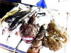 fresh fish by Christoph Felder on 500px