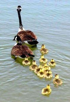....little daisy ducks !