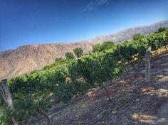 Chau #Cafayate... Hasta la próxima  #vino #AWB #MrWinesTour