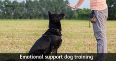 Training is a sure way to make your dog a well-behaved animal and ensure that you receive the complete ESA. So, before you apply for an emotional support animal letter online, train it properly to avoid any problems in a public setting. Dog Training Methods, Dog Training Classes, Training Your Dog, Training Online, Brain Training, Emotional Support Dog Training, Emotional Support Animal, How To Train Your, Service Dogs