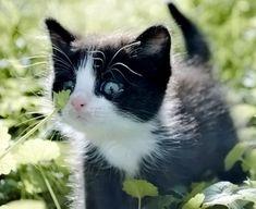 c'est quoi, ça ?!?... ça ressemble pas à mon herbe à chat... y'a plein de trucs bizarres ici... je sais pas si j'ai bien fait de les suivre, pour ces vacances à la campagne...