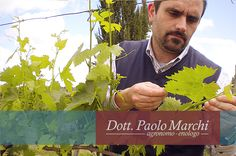 Paolo Marchi examining grapevine #florencexport