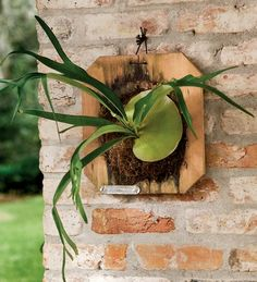 Staghorn Fern Plaque-- I've been wanting to do this for a while now!  From an article about Julieanne Moore's collection of staghorns.