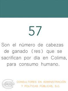 Cantidad de cabezas de res que son sacrificadas diariamente en el estado de Colima, para consumo humano.
