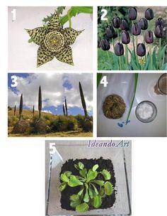 Las cinco especies vegetales más raras | Cuidar de tus plantas es facilisimo.com