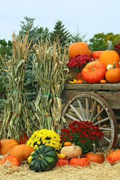 Gardening Autumn - Autumn garden harvest - flowers, pumpkins, mums - fall decorating - With the arrival of rains and falling temperatures autumn is a perfect opportunity to make new plantations Mums In Pumpkins, Fall Pumpkins, Fall Pictures, Fall Photos, Fall Pumpkin Pictures, Harvest Pictures, Deco Haloween, Autumn Scenes, Autumn Garden