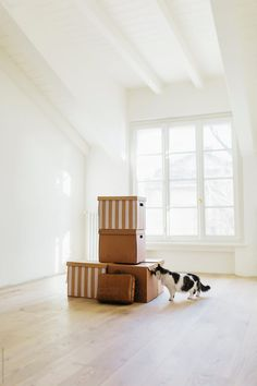 Moving Home, Curious Cat, Like A Cat, Floor Chair, Empty, Toddler Bed, New Homes, The Unit, Cats