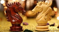 Learning chess tactics with a knight can make you a dark horse in your chess game Here's how -> http://www.chessbazaar.com/blog/pre-eminence-of-knight-the-legendary-chess-warrior/