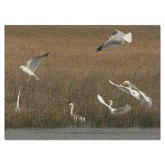 Egrets Seagulls Birds Wildlife WetlandTissue Paper - diy cyo customize create your own personalize