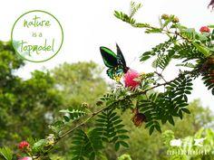 #natureisatopmodel #Natur #Schmetterling www.treibholzeffekt.com