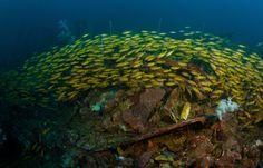 A beautiful school of fish under the seas of Sri Lanka
