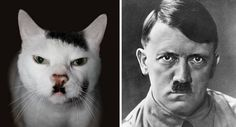 17 Cats That Look Like Celebrities