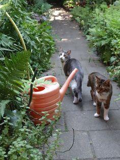 Soto en Jovi samen buiten in de tuin