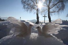 Winterhochzeit,  Parkhotel am Soier See, Bad Bayersoien, Ammergauer Alpen, Bayern ** Winter wedding with turtle doves, Parkhotel, Bavaria