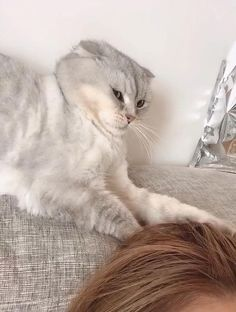 Funny Cute Cats, Cute Cats And Dogs, Cool Pets, Cute Funny Animals, Cute Baby Animals, I Love Cats, Crazy Cats, Animals And Pets, Cute Animal Memes