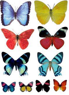"""butterfly sheet by """"T""""eresa"""