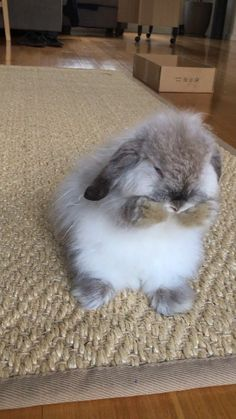 - My bunny Aragorn cleansing his f. - – My bunny Aragorn cleansing his face 🙂 – impressive animals , and animal - Baby Animals Super Cute, Cute Baby Bunnies, Cute Little Animals, Cute Funny Animals, Cute Cats, Funny Cats, Baby Animals Pictures, Cute Animal Photos, Cute Animal Videos