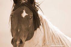 Portrait of Warbonnet! Wild stallion of McCullough Peaks  www.LivingImagesCJW.com