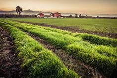 l'erba in primo piano, il Monviso dietro - anche le belle giornate finiscono al tramonto e il Monviso ci rassicura confermandoci che resterà lì anche domani.