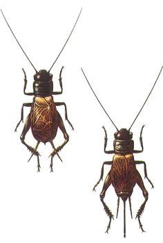 svrček poľný (Gryllus campestris)
