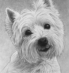 black and white drawings of westies - Google Search